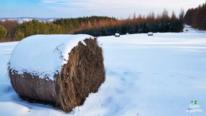 Nieliczne oznaki zimy galeria