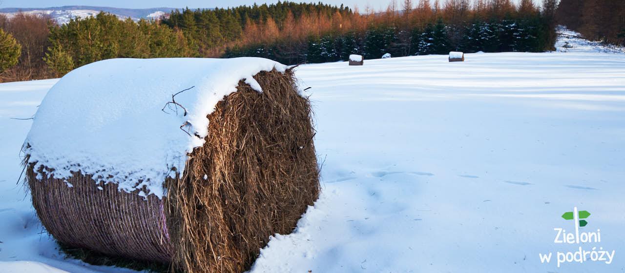 Rzepedka i zimowy spacer