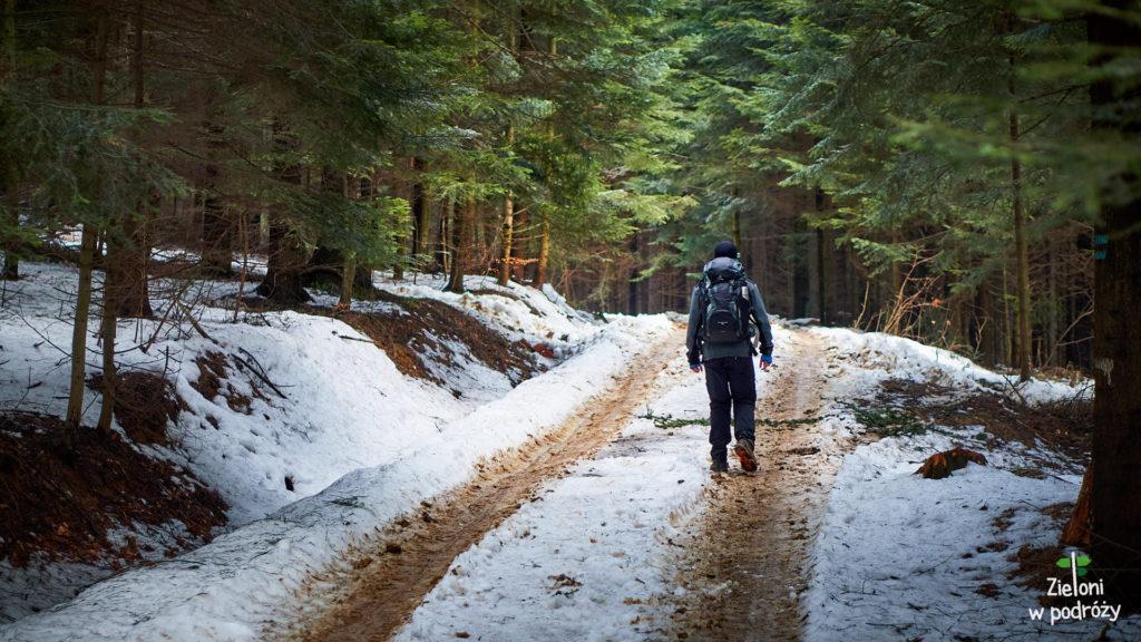 Niby zima, ale nie do końca. Ruszamy lasem na krótki spacer