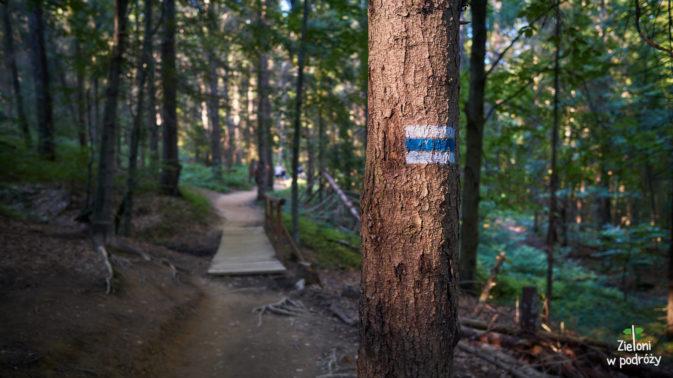 W lesie jest całkiem ciekawie. Idziemy wzdłuż niebieskich oznaczeń