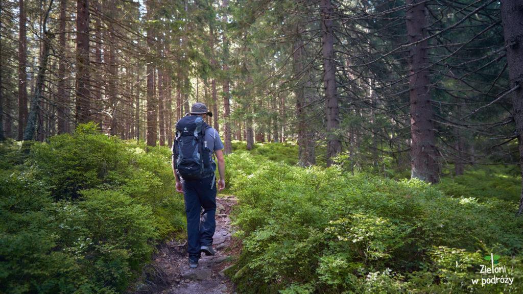 W lesie było wyjątkowo przyjemnie