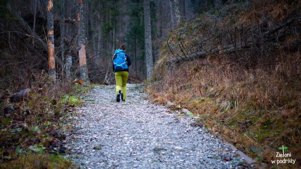 Początkowo to zwykły spacer przez las