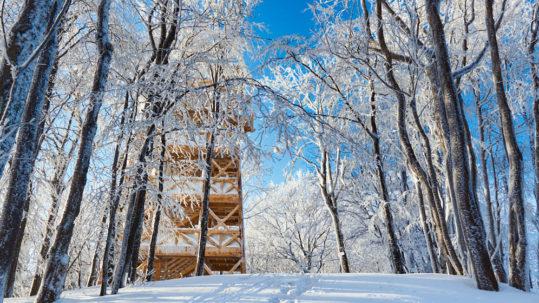 Wieża na Cergowej
