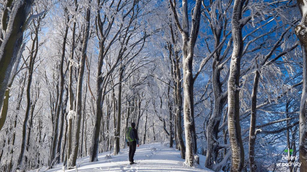 Zimowy las, to mój ulubiony las