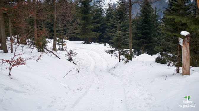 Leśne ścieżki zimą