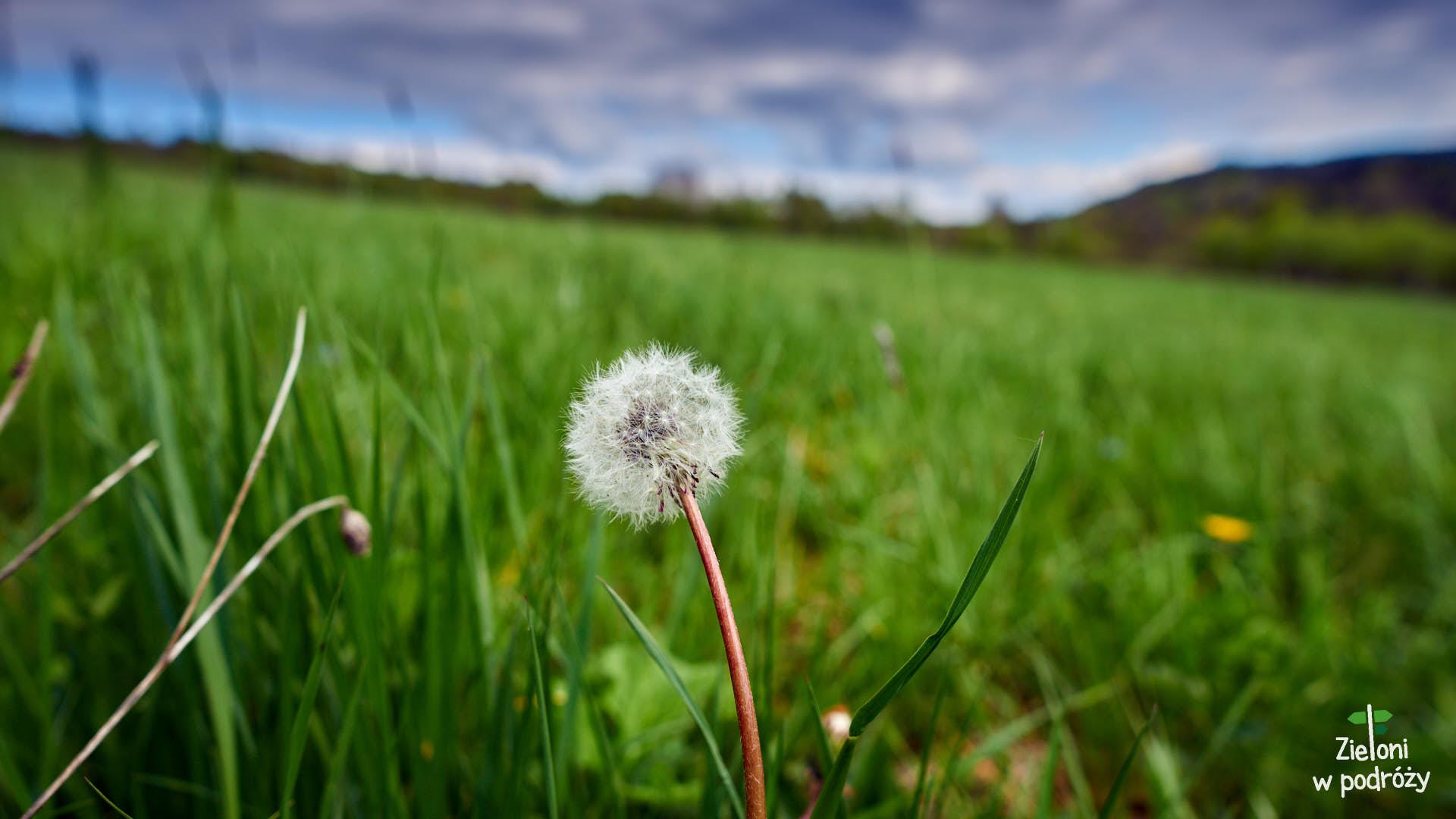 Popowa Polana – Beskid Niski wiosną