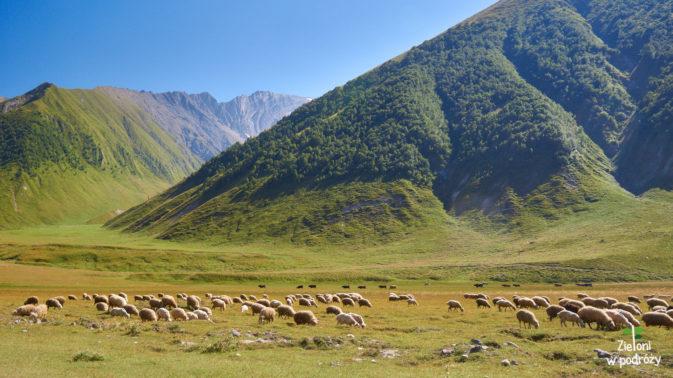 Owieczki w Dolinie Truso