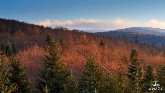A tutaj widok w kierunku dalszej części grzbietu Magury Wątkowskiej