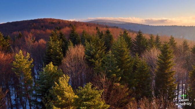 Dużo drzew
