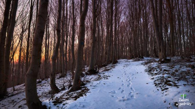 W lesie klimat też dopisuje. Przynajmniej przez chwilę