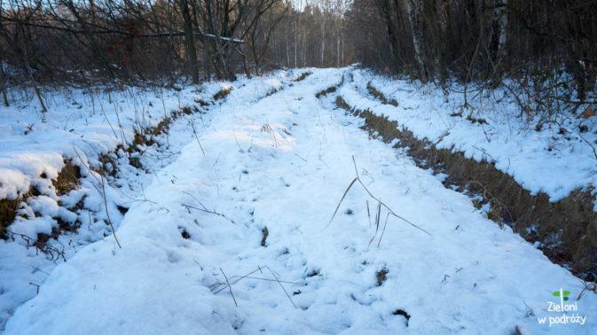 Wkraczam do lasu, gdzie znajduje się znacznie więcej śniegu