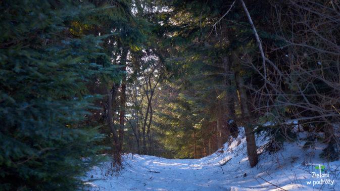 Etap przez las dłużył się tylko pod sam koniec