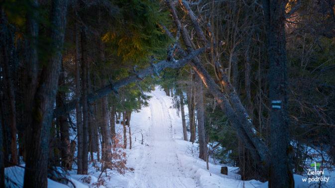 Niby to tylko spacer przez las, ale też jest miło