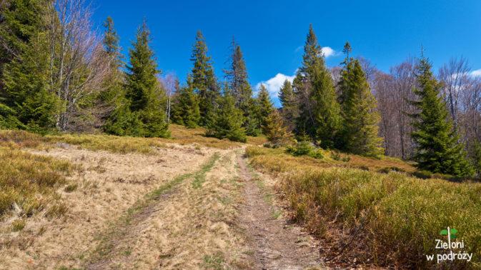 Częściowo lasem, czasami przez polany. Jest ładnie