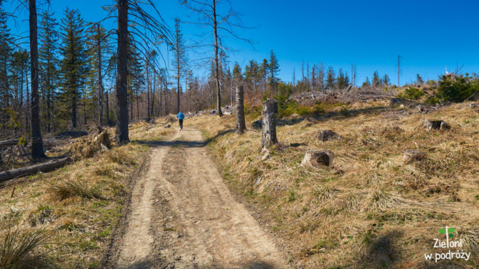 Mijamy miejsce z chorymi i wyciętymi drzewami