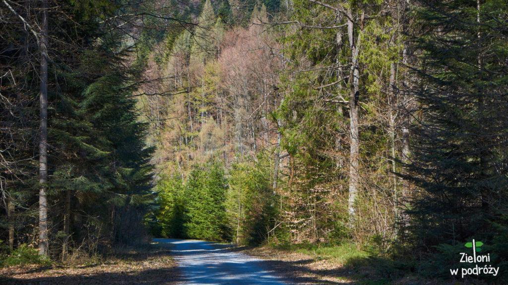 Tak mniej więcej zaczyna się niebieski szlak z Łomnicy Zdroju na Halę Łabowską