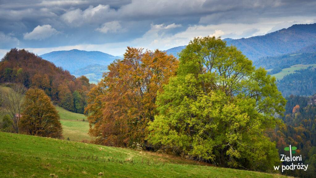 Niektóre drzewa jeszcze się bronią przed zmianą szaty na jesienną