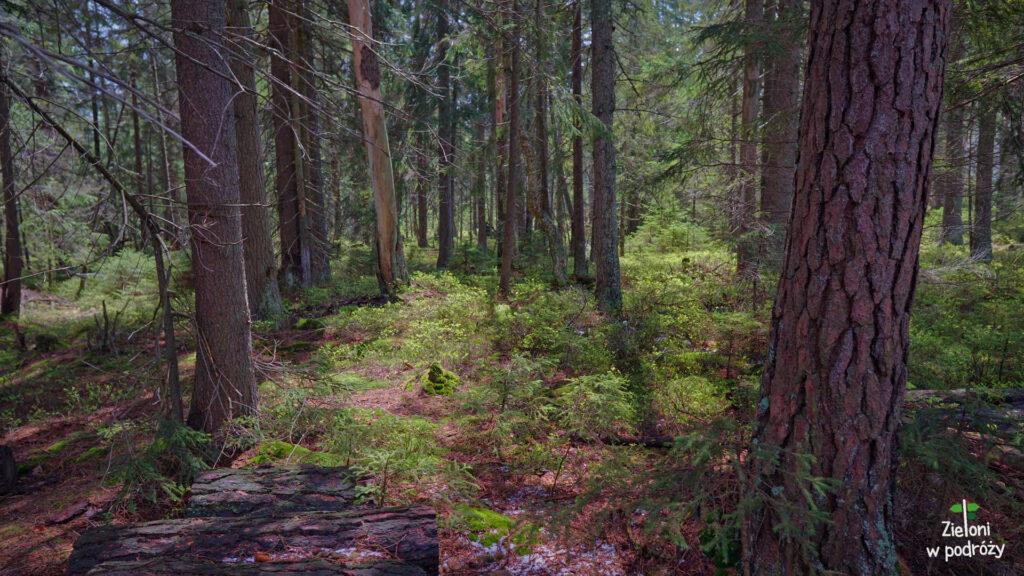 Las był tego dnia naprawdę klimatyczny